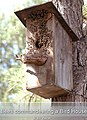 Beesinbirdhouse.jpg