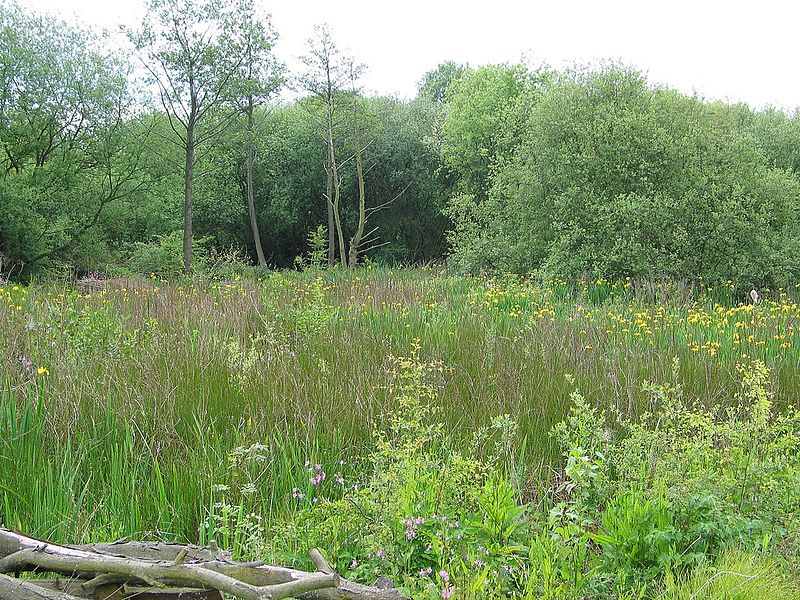 File:Beeston Marsh, Attenborough Nature Reserve.jpg