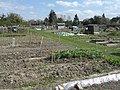 Bennetts Road Allotments - geograph.org.uk - 388105.jpg