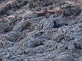 Betancuria, 35637, Las Palmas, Spain - panoramio (17).jpg