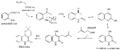 Biosíntesis de flindersina.png