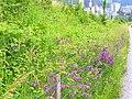 Blüten - panoramio (1).jpg