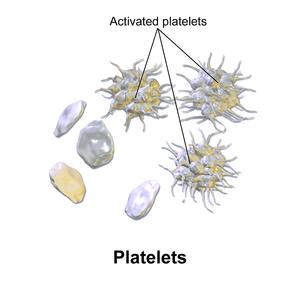 Blausen 0740 Platelets.png