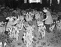 Bloemententoonstelling Bloemlust Lisse, Bestanddeelnr 906-2984.jpg