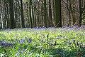 Bois d'Hubermont, Bois d'Antoing, Bois de Leuze 04.jpg