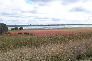 Bool Lagoon Game Reserve - Bool Lagoon. The red plant is samphire.