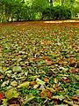Botanička bašta Jevremovac, Beograd - jesenje lišće.jpg