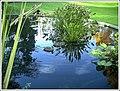 Botanischer Garten Freiburg - Botany Photography - panoramio (14).jpg