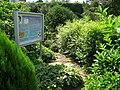 Botanischer Garten der Universität Würzburg - IMG 6914.JPG