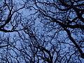 Branches (3508408281).jpg