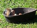 Brevard Zoo Australian Animals - Flickr - Rusty Clark (6).jpg