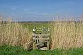 Bridge through the reeds - geograph.org.uk - 393563.jpg