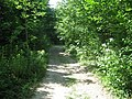 Bridleway in Rice Wood - geograph.org.uk - 1369964.jpg