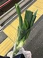 Bunching onion in a plastic shopping bag.jpg