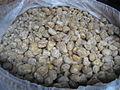Burmese jaggery.JPG