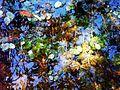 Céu azul refletido na água transparente em meio a plantas aquáticas..JPG