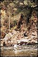 CALIFORNIA--KINGS RIVER - NARA - 542529.jpg
