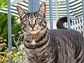 CAT2007 05 16.jpg