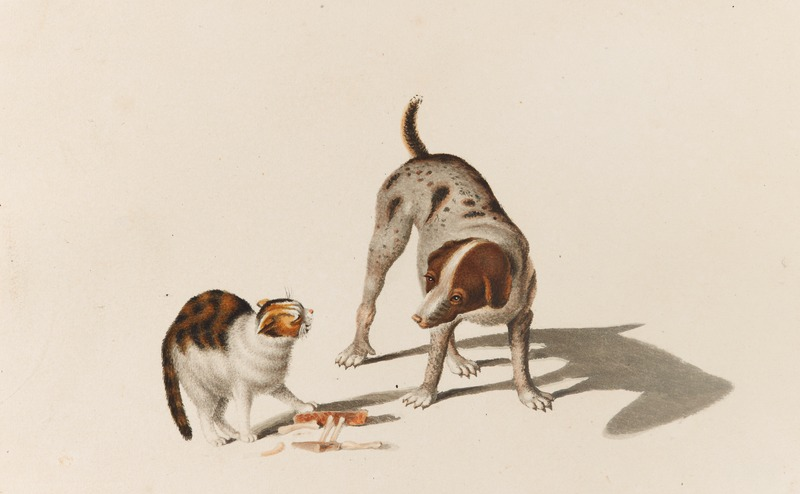 File:CH-NB - Tiere - Collection Gugelmann - GS-GUGE-MIND-E-17.tif