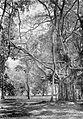 COLLECTIE TROPENMUSEUM Waringinboom te Buitenzorg Java TMnr 10006191.jpg