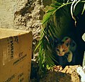 Camera shy Cat.jpg