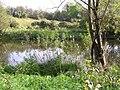 Camowen River - geograph.org.uk - 1532577.jpg