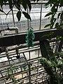 Canopy Walk - The Tropics - US Botanic Gardens 03.jpg