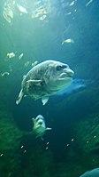 Cape Aquarium 20180719 211909 (12).jpg