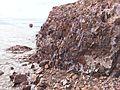 Cape Korabl rock Parus.jpg