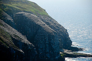 Cape St.Mary's Newfoundland.jpg