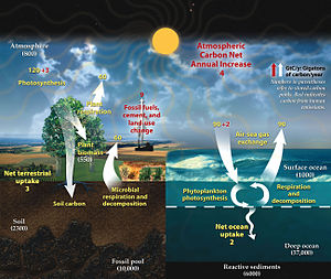 Carbon cycle - This diagram of the fast carbon cycle shows the movement of carbon between land, atmosphere, and oceans in billions of tons per year. Yellow numbers are natural fluxes, red are human contributions, white indicate stored carbon.  Note this diagram does not account for volcanic and tectonic activity, which also sequesters and releases carbon.