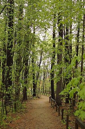 Carlisle, Massachusetts - Image: Carlisle MA forest path