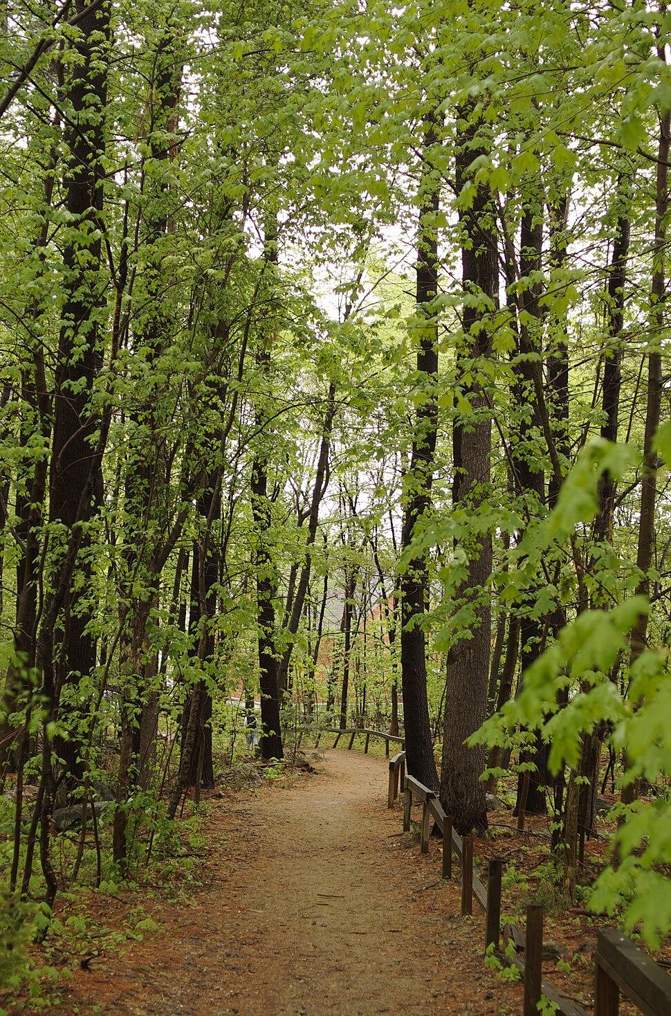 Carlisle MA forest path