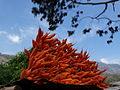 Carrots in Munnar.JPG