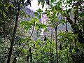 Catarata de Gocta darrera els arbres en el camí entre les dues caigudes02.jpg