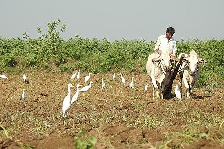 Economy of Maharashtra - Wikiwand