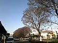 Centro, Tlaxcala de Xicohténcatl, Tlax., Mexico - panoramio (226).jpg