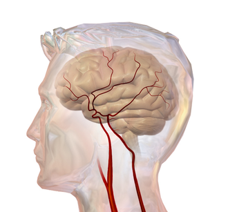 Cerebral circulation - Cerebrovascular System