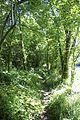 Chemin contournant le Camp de Bierre.jpg
