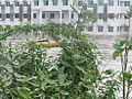 Chennai-floods-2015-dec-5.jpg