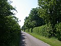 Chestnut trees lining Grange Road - geograph.org.uk - 792664.jpg