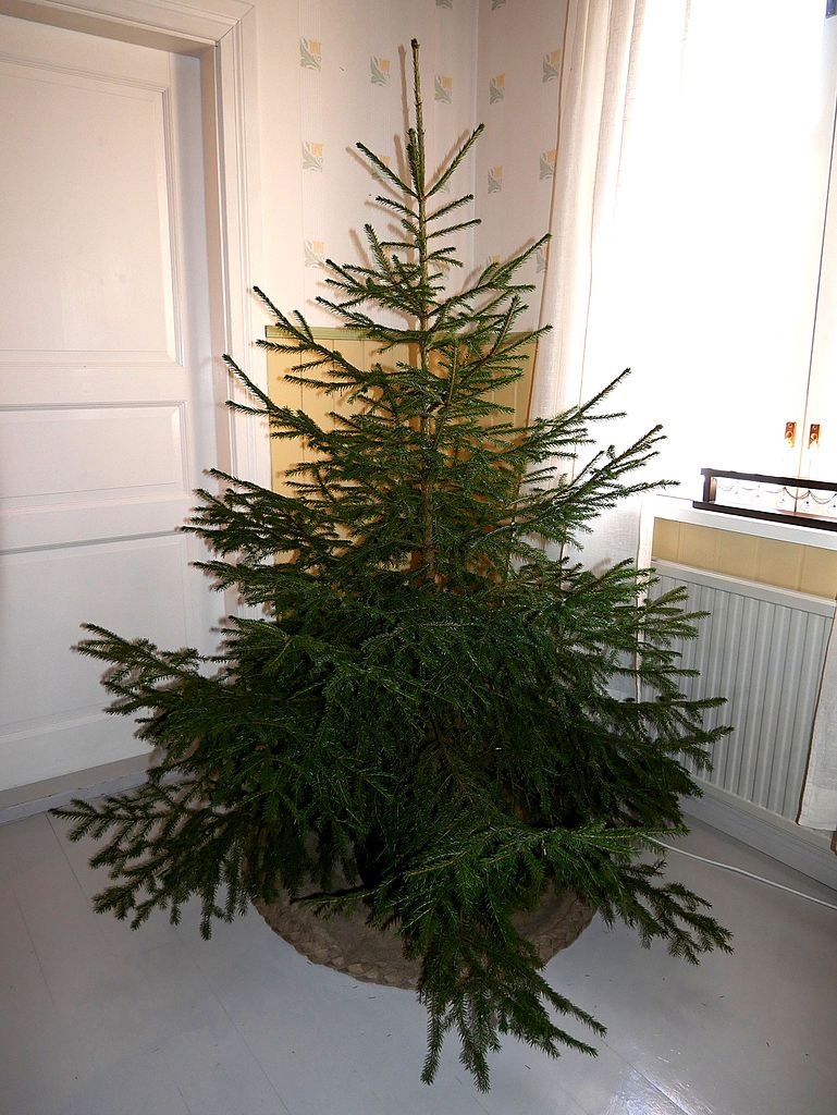 Christmas Trees Without Ornaments file:christmas tree without ornaments - wikimedia commons