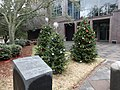 Christmas trees in front of Tallahassee City Hall 01.JPG