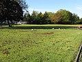 City geese - geograph.org.uk - 1017376.jpg
