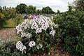City of London Cemetery - flowering shrubs 13.jpg
