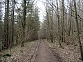 Cleveland Way in Quarry Bank Wood - geograph.org.uk - 331554.jpg