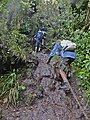 Climbing the chain from Te Toto to Karioi Lookout.jpg