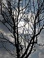 Cloudy skies in Koshi Tappu Wildlife Reserve.jpg