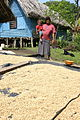 Coffee farmer and hotel owner, Vanuatu 2010. Photo- AusAID (10687369883).jpg
