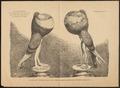 Columba domestica var. gutturosa - 1700-1880 - Print - Iconographia Zoologica - Special Collections University of Amsterdam - UBA01 IZ18900149.tif